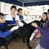 Seremi de Salud Vacuna Contra la Rabia a Perros Vagos de la Universidad Católica del Norte