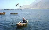 CORE Aprueba Programa de Financiamiento Para Pescadores Artesanales de Tocopilla