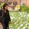 Agricultores Locales Aseguraron Producción Hidropónica Hasta el 2033