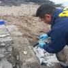 PDI Investiga Posible Derrame de Combustible en Antofagasta