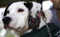 Calameños Podrán Rastrear a Sus Mascotas A Través Del Celular