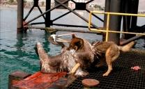 Ataques de Perros Ponen en Peligro Fauna Silvestre Local