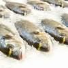 Desembarques Pesqueros Crecieron 56% el Último Año en la Región