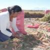 Pequeños Agricultores de la Región Pueden Acceder a Herramientas de Financiamiento A Través de Innovador Portal AgroAtiende