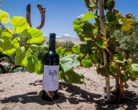 Vino Ayllu Fue Premiado Con Medalla de Oro en el Concurso Catad'Or Wine Awards 2020