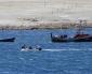 Más de 2 Mil Pescadores Podrán Seguir Trabajando Durante Cuarentena