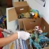 Aduanas Rescata 9 Guacamayos Bebés en la Avanzada El Loa
