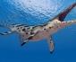 Paleontólogos Encuentran Vestigios de un Pliosaurio en Calama