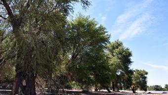 Llaman a Prevenir Incendios Forestales en la Provincia de El Loa