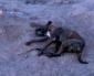 Municipio de Calama Advierte a la Comunidad Sobre Envenenamiento de Mascotas
