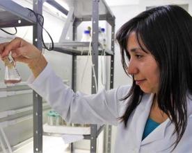 Científicos de la U. de Antofagasta Investigan Nueva Herramienta Diagnóstica Para Detectar Virus Respiratorios