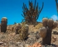Desarrollan Estudio Para Conservar la Flora Costera en Riesgo de Extinción de la Región