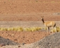 Lanzan Campaña Por la Preservación de Fauna Local