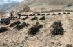 Sernapesca Decomisa 550 kilos de Algas Barreteadas en Tocopilla