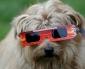 Académico de Medicina Veterinaria de UST Aclara Mitos Sobre Las Mascotas y el Eclipse Solar