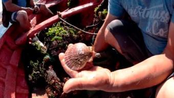 Proyecto Acuícola Inició Producción de Especies Marinas en la Costa de Taltal