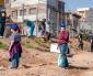 """Más de 300 Árboles Han Sido Plantados Gracias a la Exitosa Campaña """"Un Niño, un Árbol"""" en Antofagasta"""
