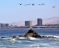 Inquieta el Cuidado y Preservación de la Biodiversidad en la Costa de Antofagasta