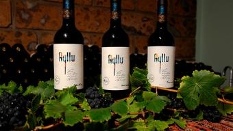Tras Triunfar en Mundial Europeo, Vinos Ayllu se Prepara Para Exportar al Mercado Estadounidense